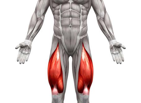 Quadriceps et Squats variations