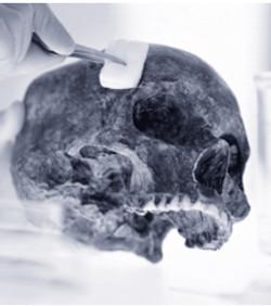 skull web.jpg