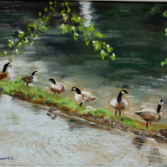 Geese on the Harrison River