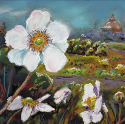 Japanese Anenome at the Bandstand