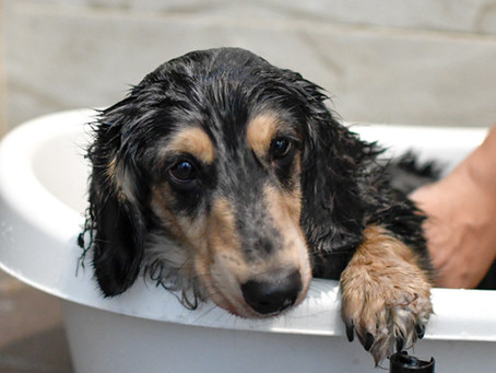 How to choose the right dog shampoo?