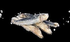 just sardines no bg.png