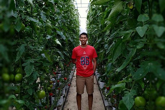 earthponic di kebun tomat hidroponik