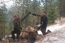 31852-Burnworth elk2