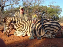 597-stearns zebra
