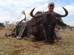 17092-wildebeest