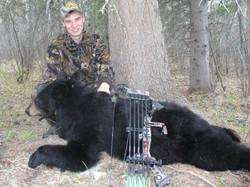 26293-bear