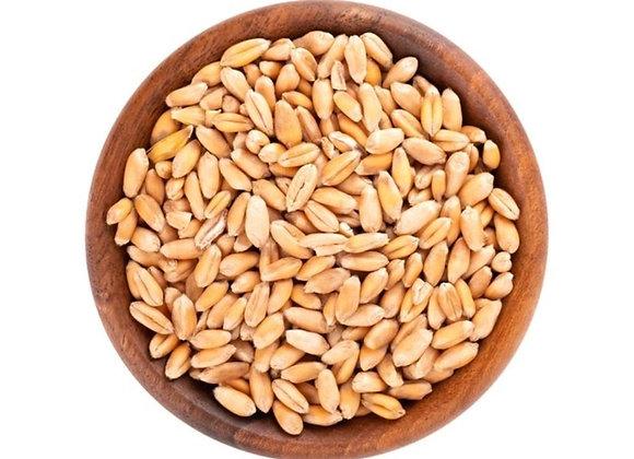 Weizenkörner 1kg