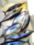 Deep Sea Yellowfin and Bigeye Tuna