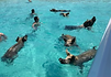 swimmingwithpigs1_edited.png