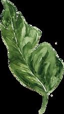 leaf 7.png