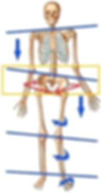 Egoscue Method Elevated Rotated Pelvis Knee Pain.jpg