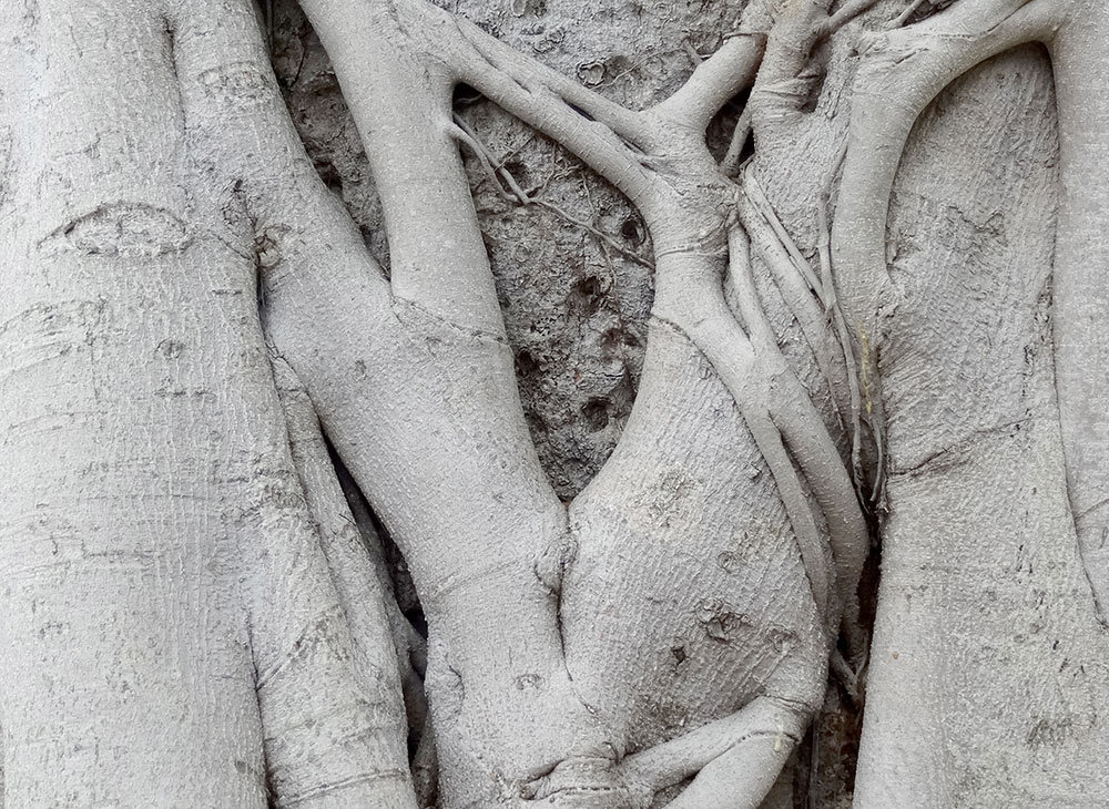 arbre-sophie-site-web.jpg