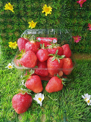 fraise clery.jpg