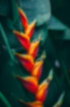 Screen Shot 2019-10-13 at 9.59.09 PM.png