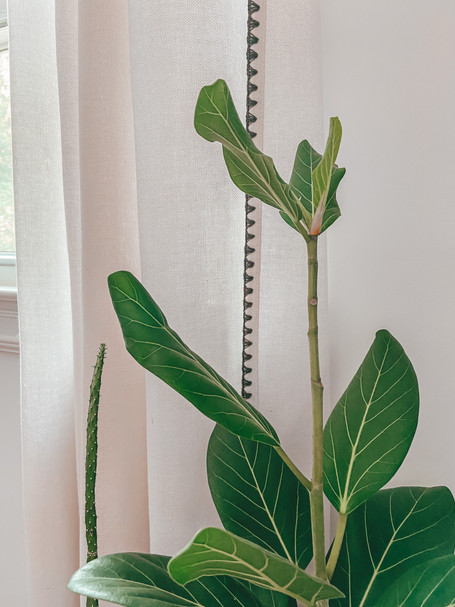 How to Treat Houseplant for Thrips