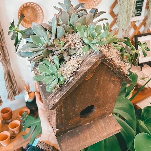 Succulent Roof Birdhouse
