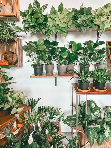 Why Plants Benefit Your Mental Health