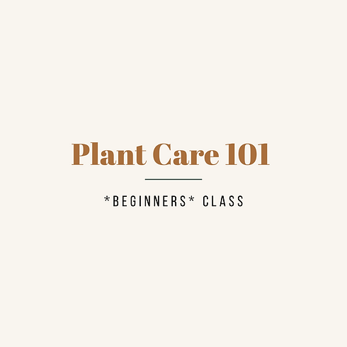 Plant Care 101