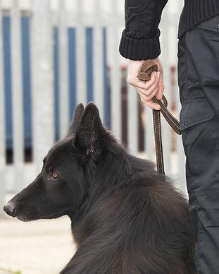 Garde de sécurité avec chien