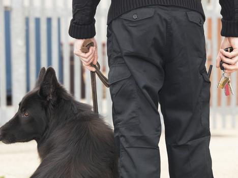It Isn't Just Pet Dog Training That Needs Regulation