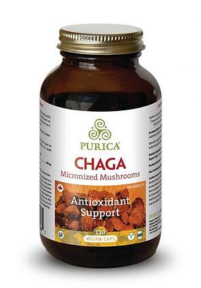 Chaga-Purica
