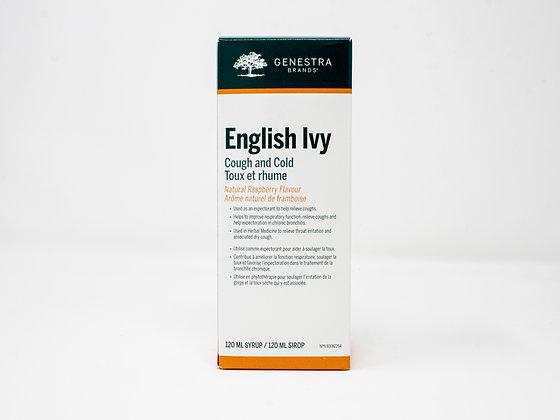 English Ivy - Genestra