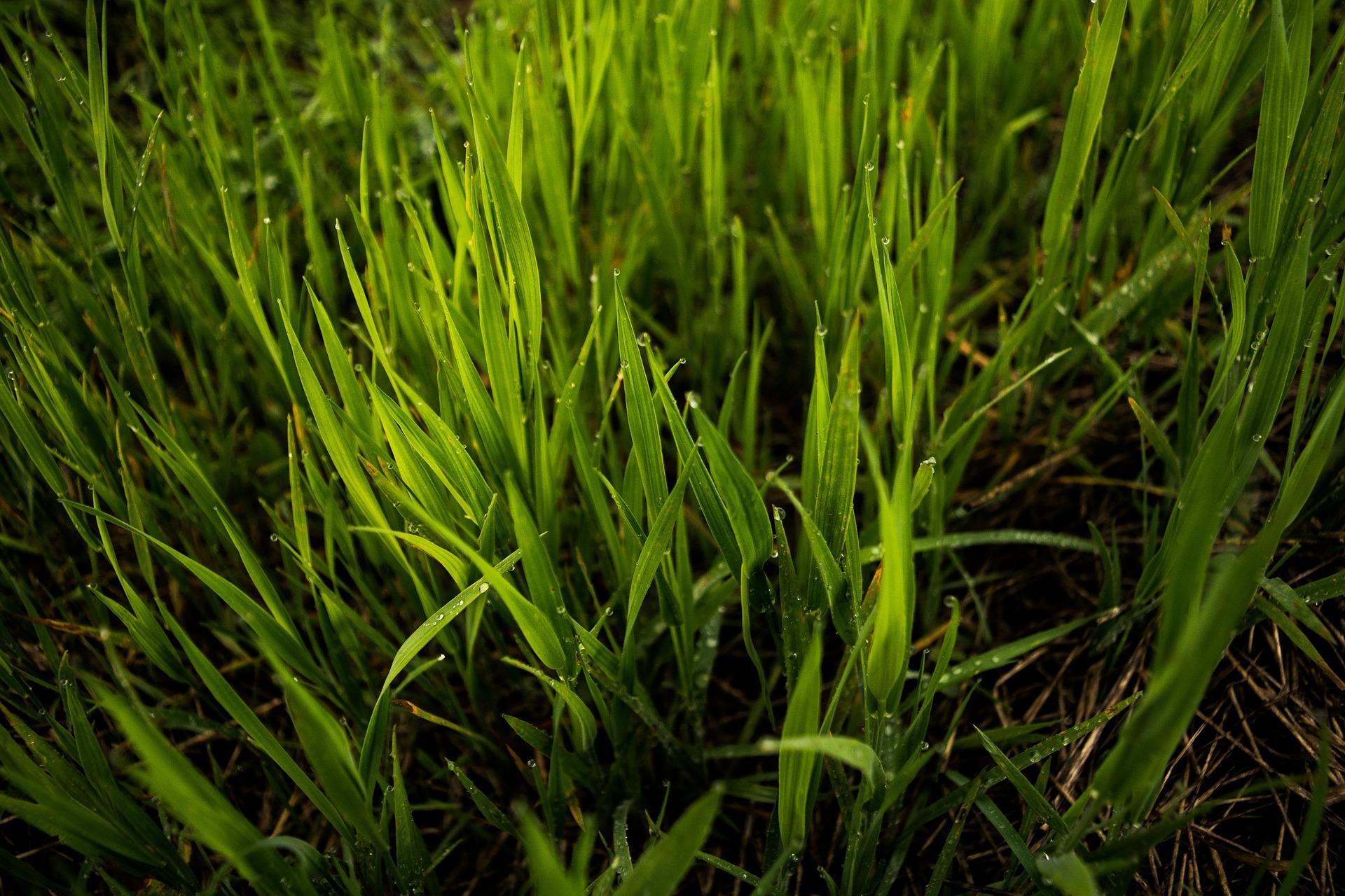 grass-839561_1920