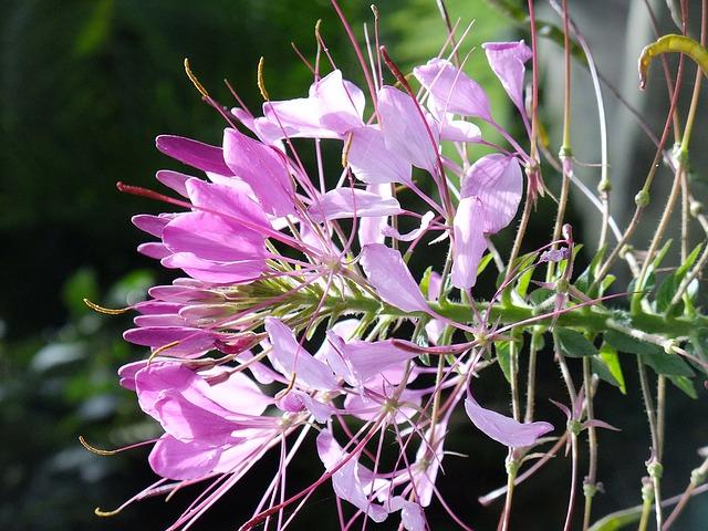 garden-1146323_640
