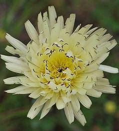 fleur forfaits cours