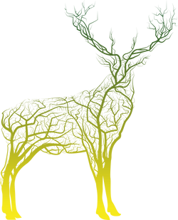 Stag_GreenYellow_AW