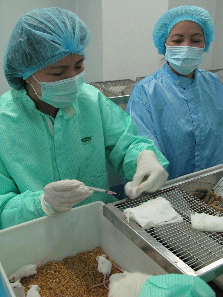 Sau tiêm vắc-xin, hiện chuột thí nghiệm khoẻ mạnh và tiếp tục được theo dõi.  JP88