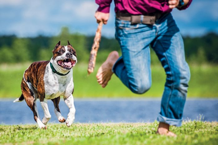 Chiêm bao thấy chó rượt đuổi là điềm tốt hay xấu?