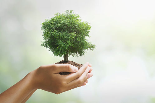 hand-holdig-big-tree-growing-green-backg
