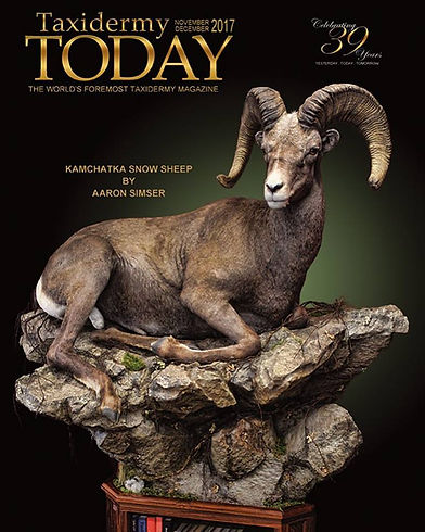 World Class Taxidermy: Life-Size Bighorn Sheep Taxidermy: Artistic Visions Wildlife