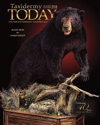 World Class Taxidermy: Life-Size Black Bear Taxidermy: Artsitic Visions Wildlife