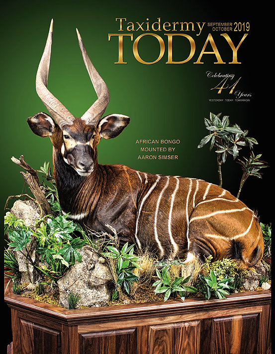 World Class Taxidermy: Life-Size African Bongo Taxidermy: Artistic Visions Wildlife