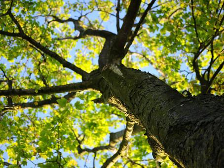 Les balades en forêt : pour méditer ou trouver votre moitié ?