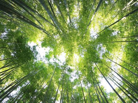 Les entreprises se mettent au vert avec les team buildings nature