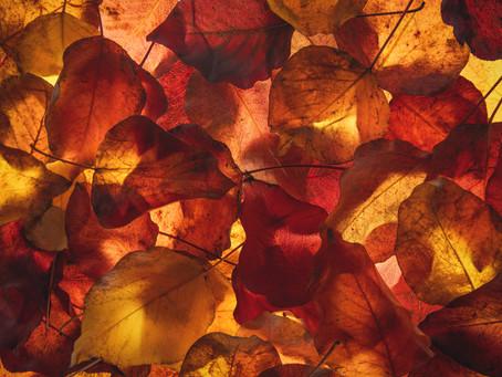 L'automne, c'est aussi dans les forêts
