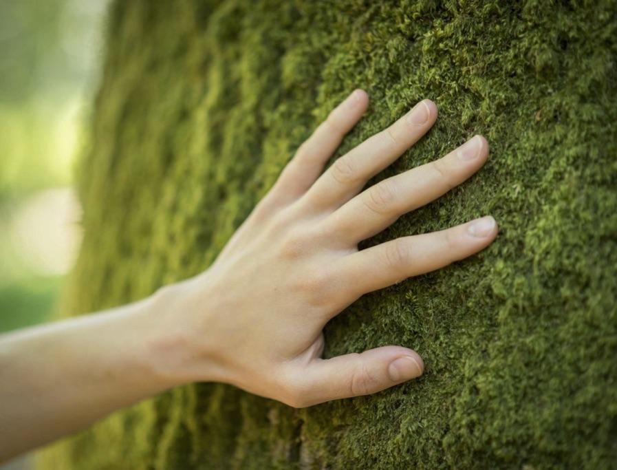 teambuilding nature