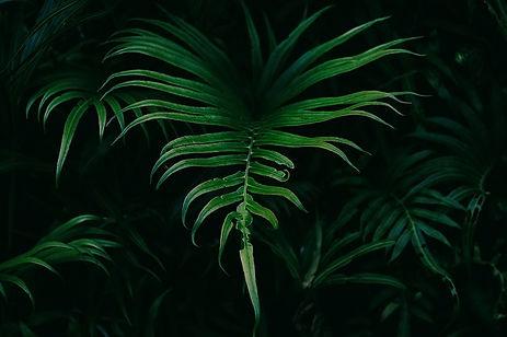 leaves-1835780_640.jpg