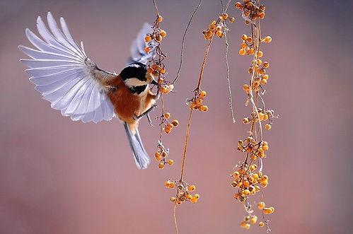 oiseau fruits.jpg