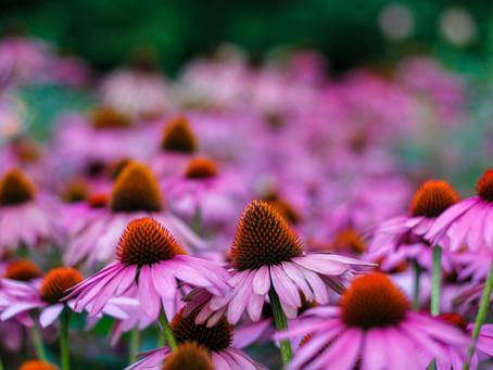 CORONAVIRUS : les plantes pour vous requinquer