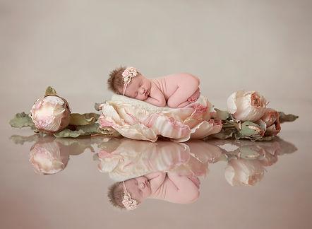 rosenb.jpg