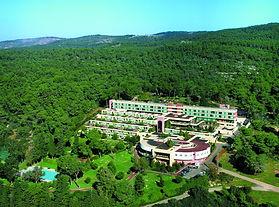 carmel forest haifa israel.jpg