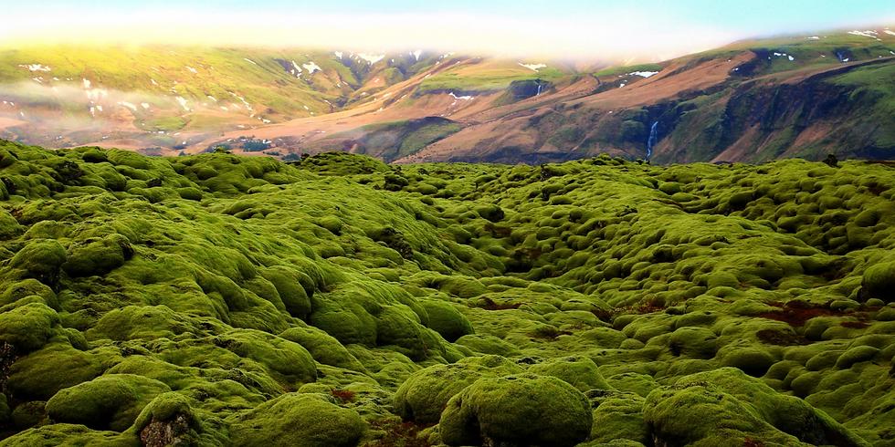 Златният кръг на Исландия и мистичната красота на Лаугавегур