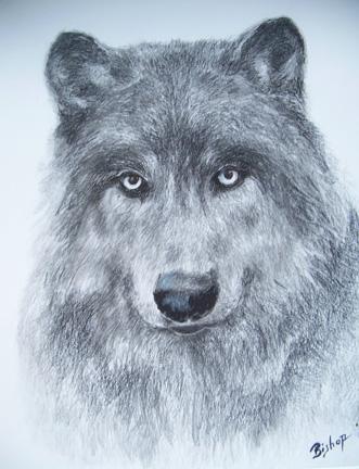 #281 Wolf