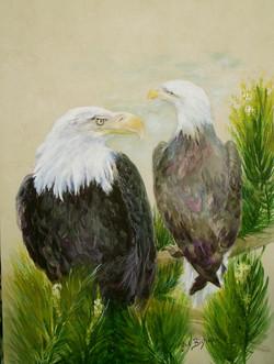 #360 eagle pair