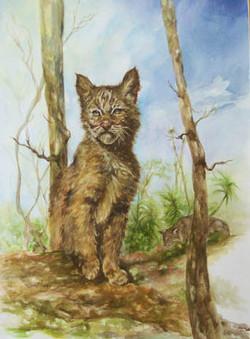 #166 Bobcat Kitten